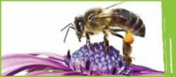 Festa delle api